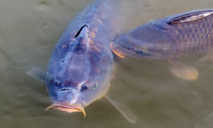 New hope for Canada's freshwater fishers