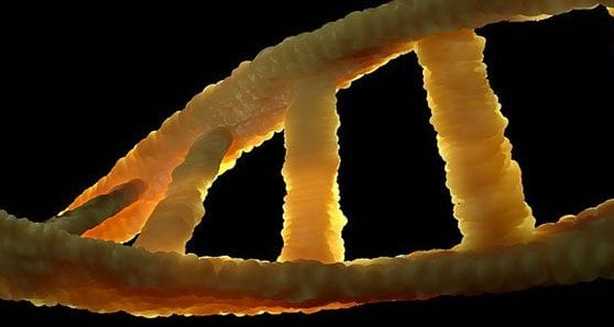 Genetics strongly influence our predisposition to mental illness