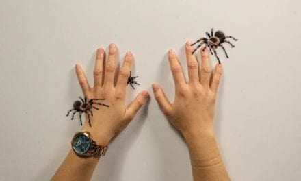Game helps people overcome fear of spiders