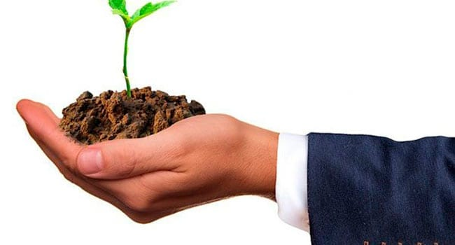 Businessman holding a plant in the palm of his hand