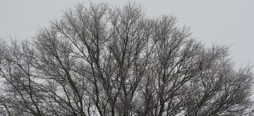It's still winter but my trees are getting chubby