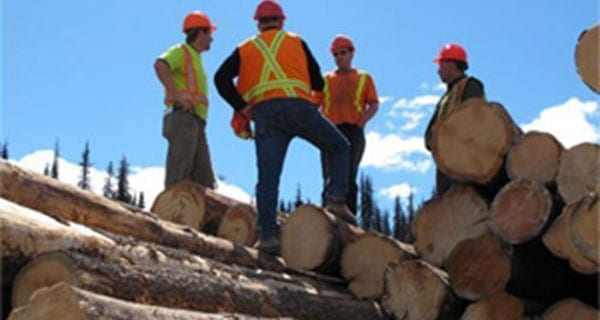 Tough first half of the year for Alberta forestry sector