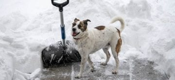 Self-discovery, one shovelful of snow at a time