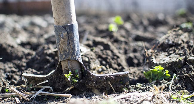 Tree planting and the psychology of business success